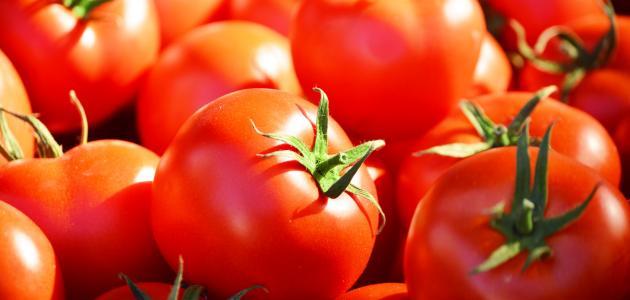 كيف أفرزن الطماطم