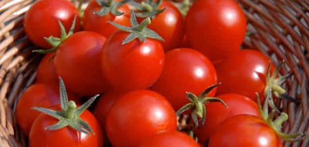 أمراض الطماطم وطرق مكافحتها