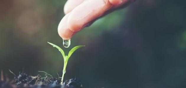 بحث عن أهمية الماء والهواء والنبات