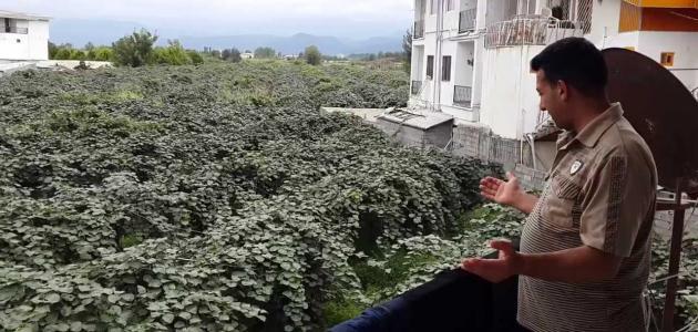 مدينة جالوس في إيران
