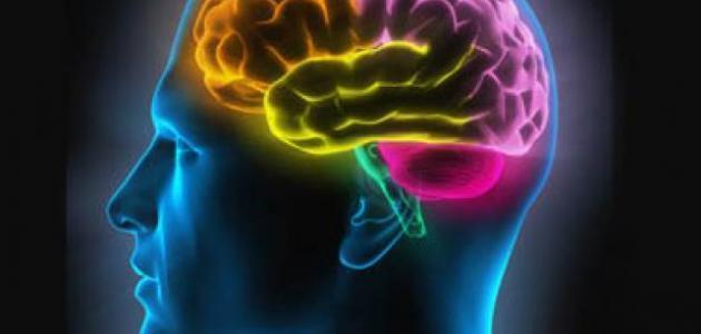 مفهوم الذاكرة