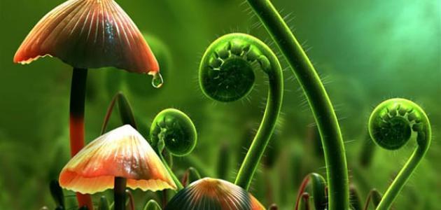 مظاهر قدرة الله في النبات