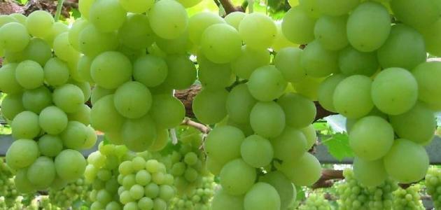 فوائد العنب الأخضر للبشرة