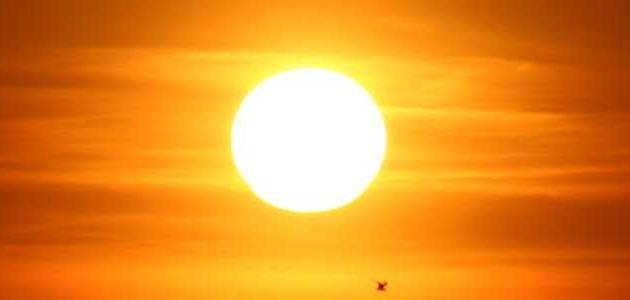 فوائد الشمس للحامل