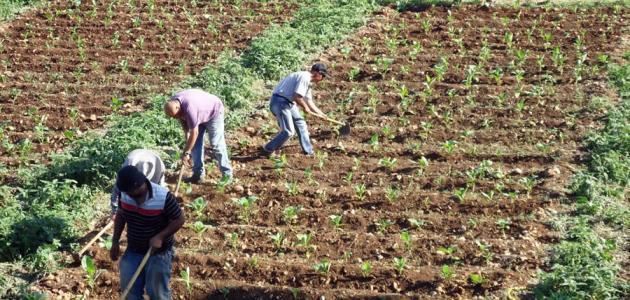 مراحل الزراعة