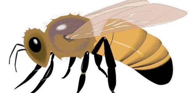 بحث عن الحشرات النافعة للإنسان