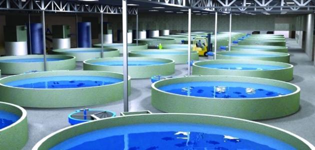 كيف يمكن تنمية الثروة السمكية