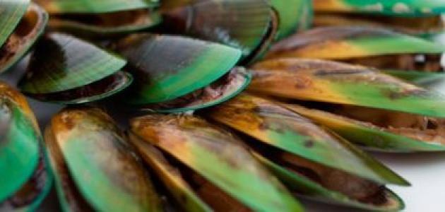 فوائد محار البحر