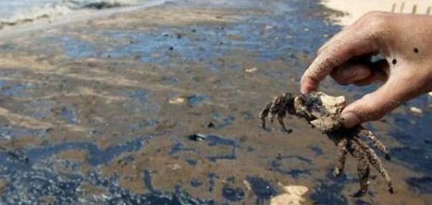 أسباب تلوث مياه البحر وانعكاسه على الثروة السمكية