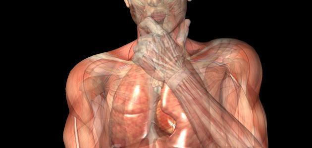 تركيب جسم الإنسان