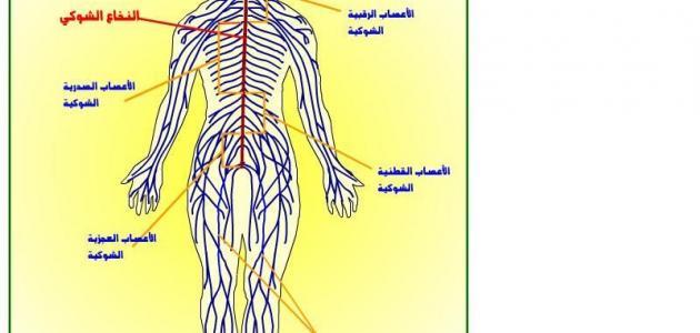 تعريف ومكونات الجهاز العصبي