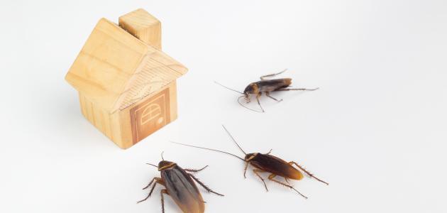 سبب وجود الصراصير في المنزل