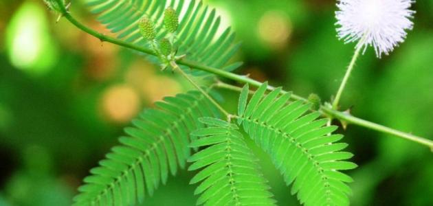 تأثير درجة الحرارة على النباتات
