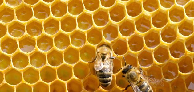 كيف ينتج النحل العسل