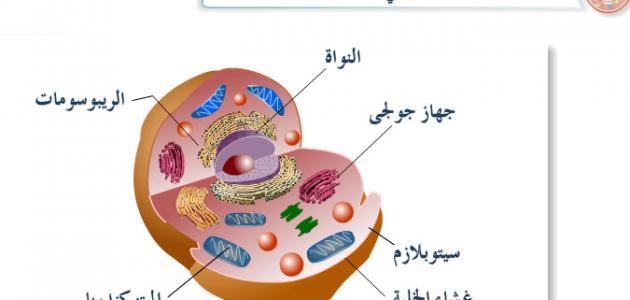 مكونات الخلية الحية