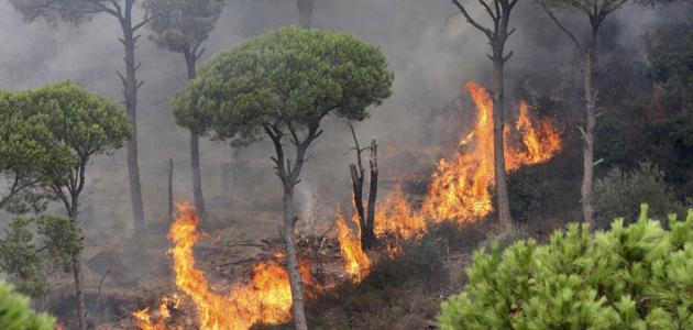 طرق حماية الغابات