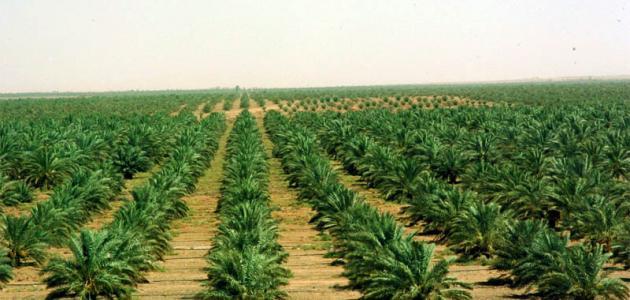 عوامل قيام الزراعة