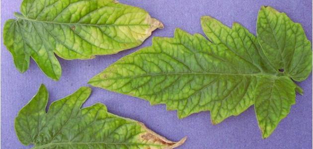أعراض نقص العناصر على النبات