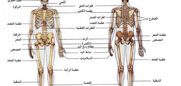 مكونات الجهاز العظمي