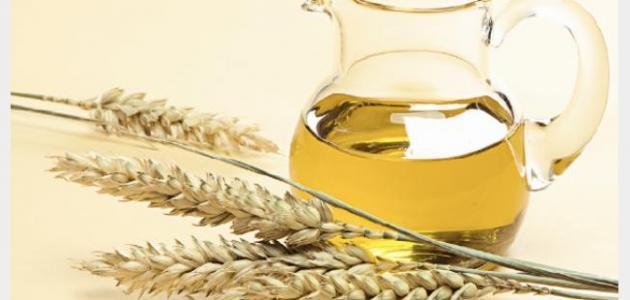كيفية استخدام جنين القمح