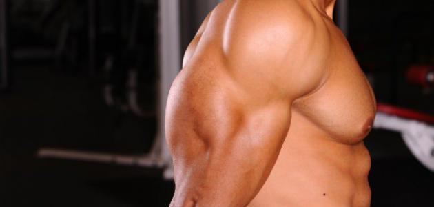 زيادة القوة العضلية