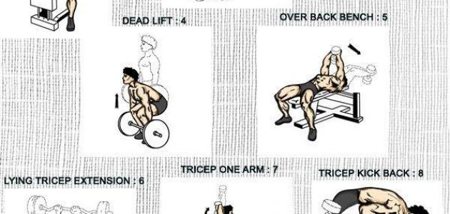 تمارين بناء الجسم