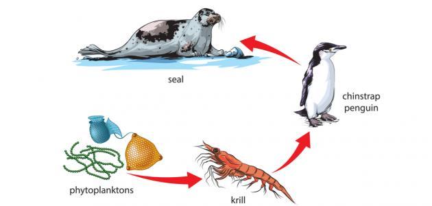 السلسلة الغذائية البحرية