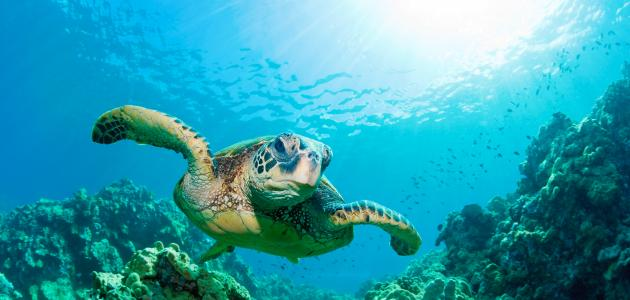 ما هو البحر الأخضر