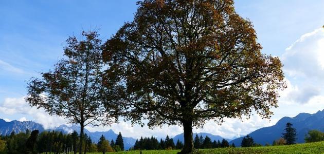 موضوع عن فوائد الشجرة