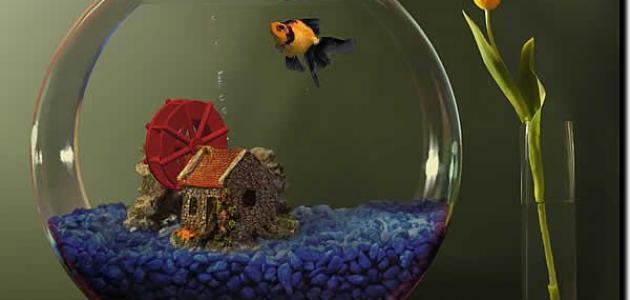 كيفية تنظيف حوض سمك الزينة
