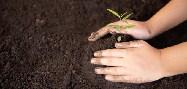 موضوع عن زراعة الأشجار