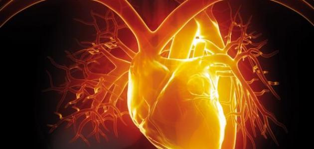 ثبات القلب
