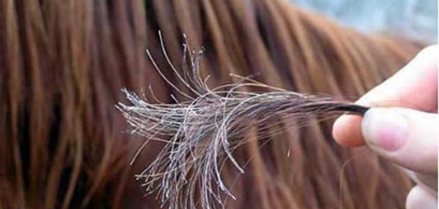 وصفات لعلاج تقصف الشعر الشديد