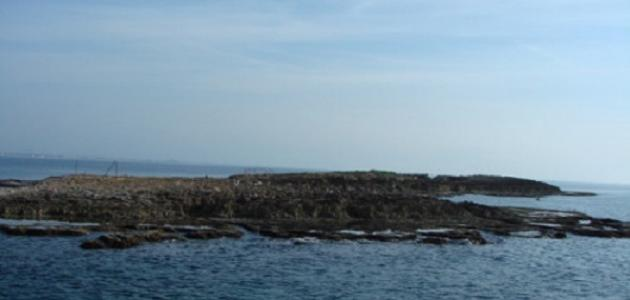 جزيرة النمل في طرطوس