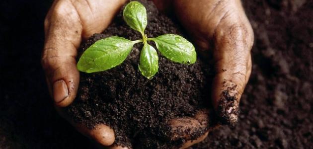 ما هي أنواع التربة