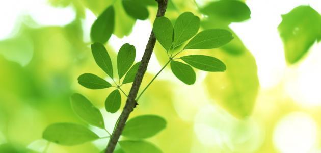 عالم النباتات الطبية