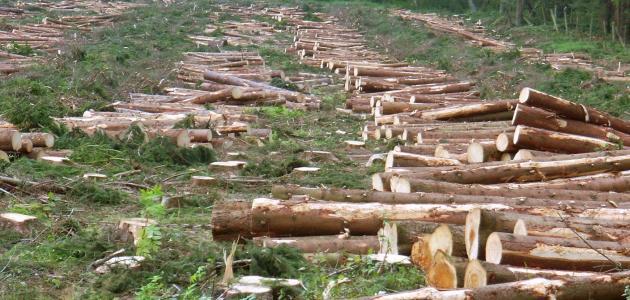 أسباب إزالة الغابات