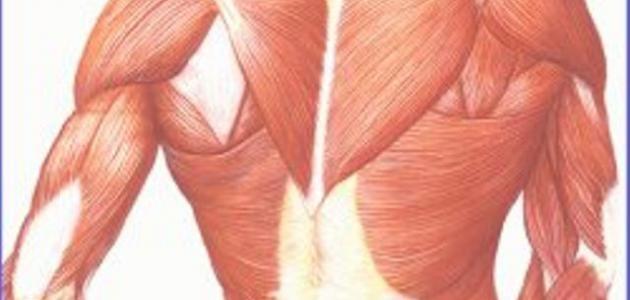 ما هو ضمور العضلات