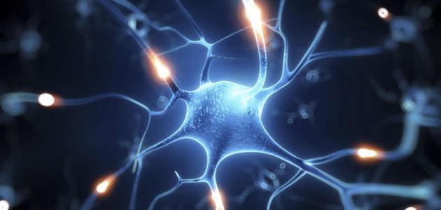 ما هو ضعف الأعصاب