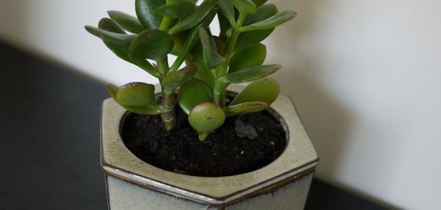 طريقة سقي النباتات المنزلية