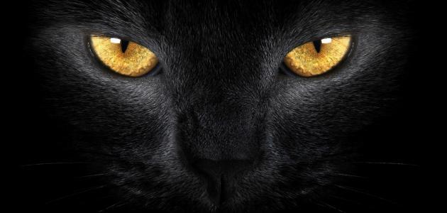 هل ترى القطط في الظلام