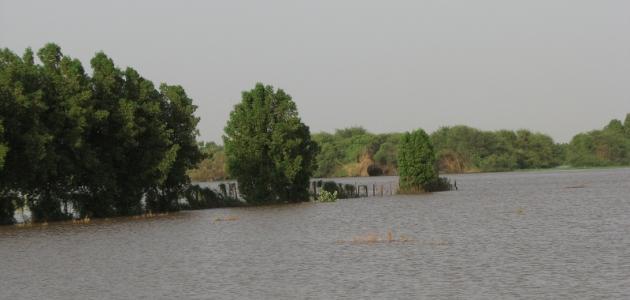 جزيرة صاي في السودان