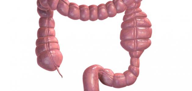 ما هو طول الجهاز الهضمي