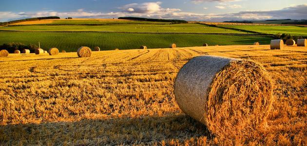 ما معنى الحصاد