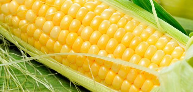 فوائد حبوب الذرة