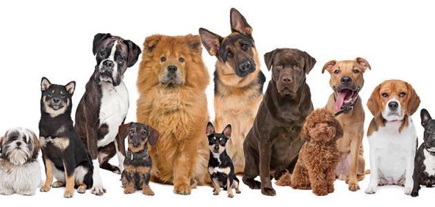 معلومات عن أنواع الكلاب