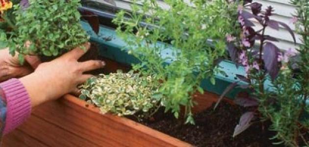 كيف أزرع في المنزل