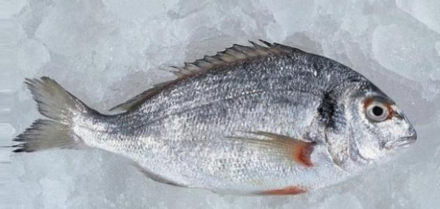 فوائد جلد السمك