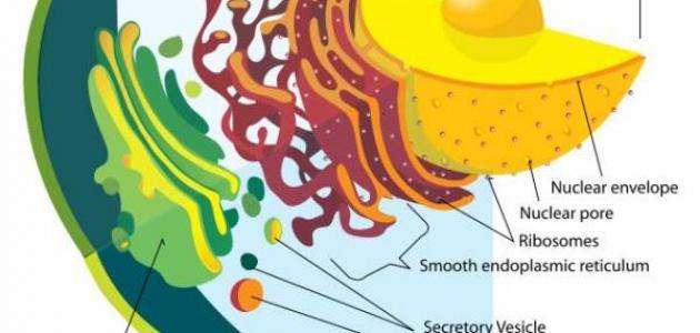 المركبات الموجودة في الخلية