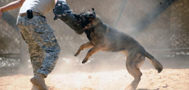 كيفية تدريب الكلاب على الشراسة